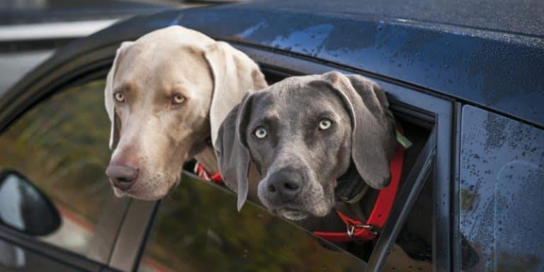 Best Dog Booster Car Seats