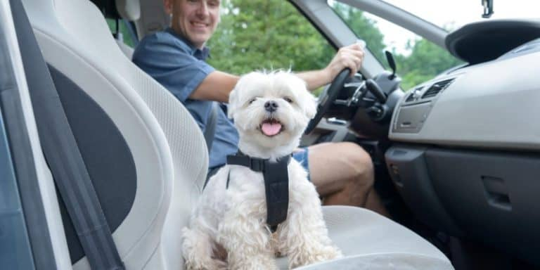 Best Dog Harnesses & Seat Belt Restraints