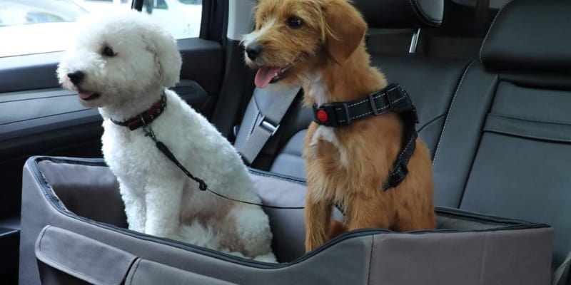 dog booster seats for your pet